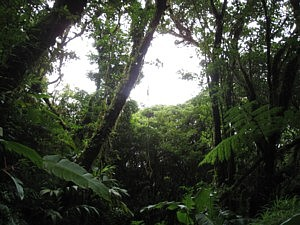 The Santa Elana Cloud Forest Reserve